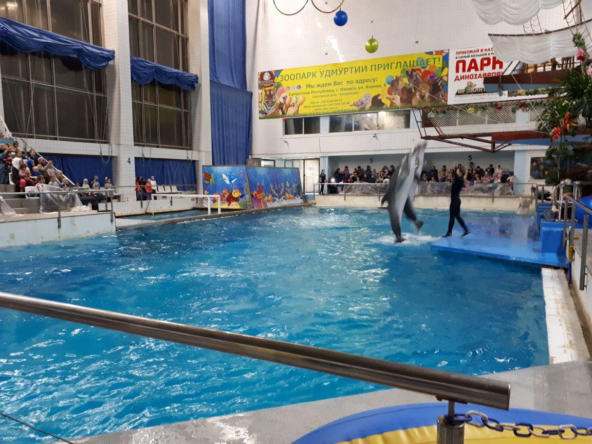 Дельфинарийда шоу